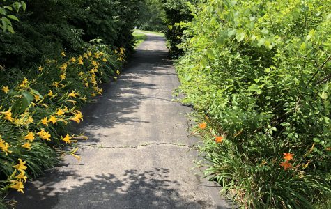 Walking trail with flowers 1