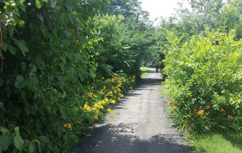 Walking trail with flowers 3